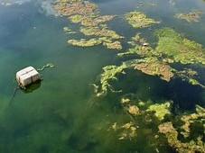 禁止向农用地排放超标污水污泥